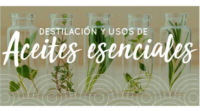 Destilación y uso de aceite esenciales